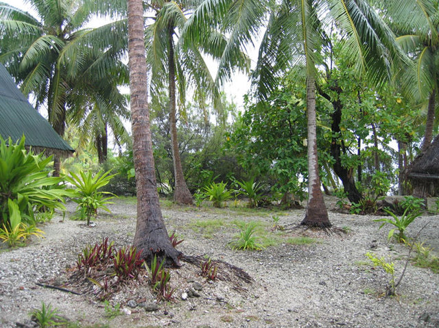 cocoteraie Rangiroa